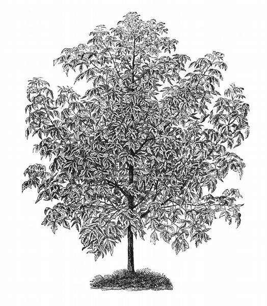 Test Namalujte Strom A Poznejte Svou Osobnost Maminka Cz